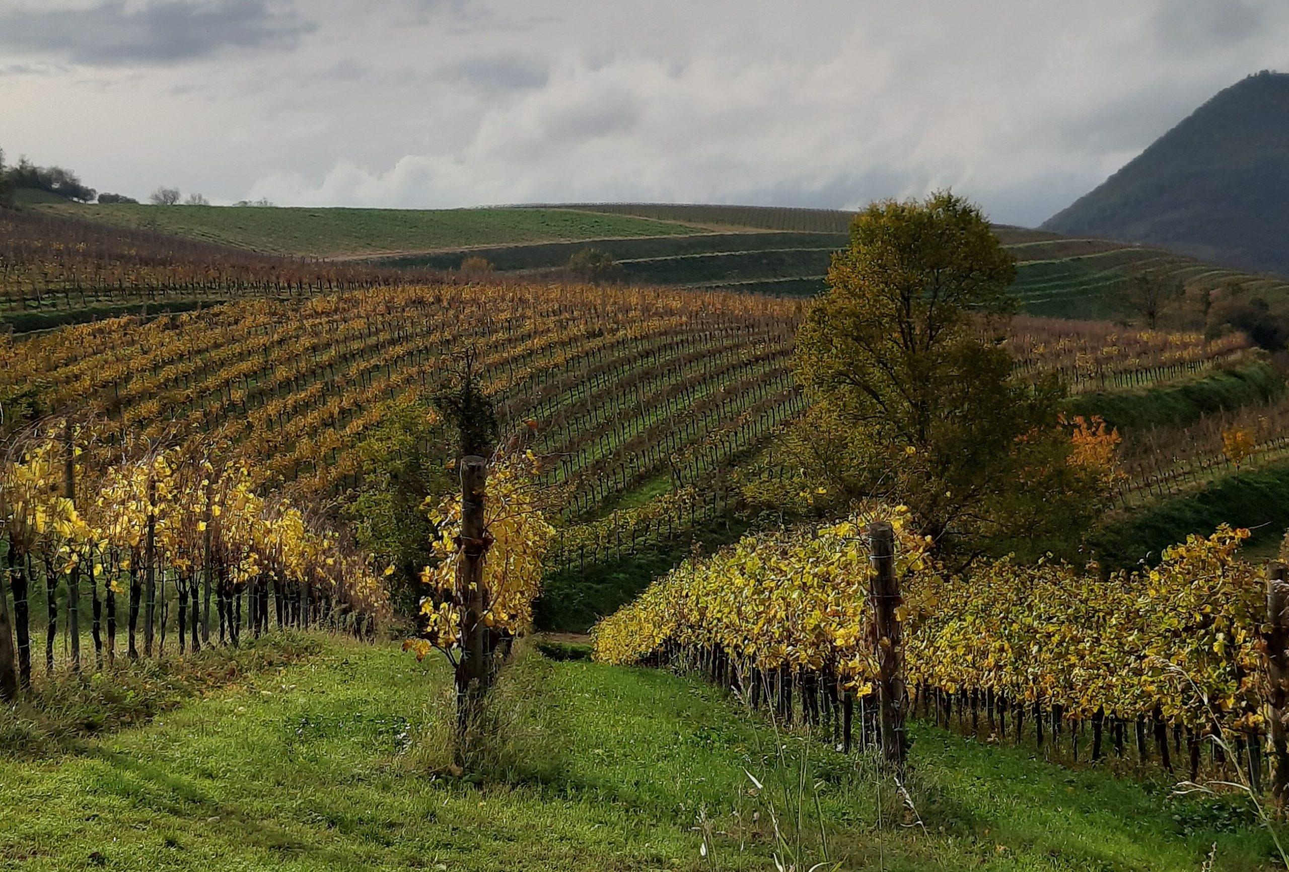 Monteversa: alla scoperta dei vini giovanili